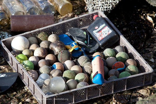 Nearly fifty tennis balls and only one shotgun shell found. Maybe it is not the duck hunters we need to worry about. Rather, those renegade tennis players. I traded that new quart of 20-50 for a dozen kumamotos. Yum!