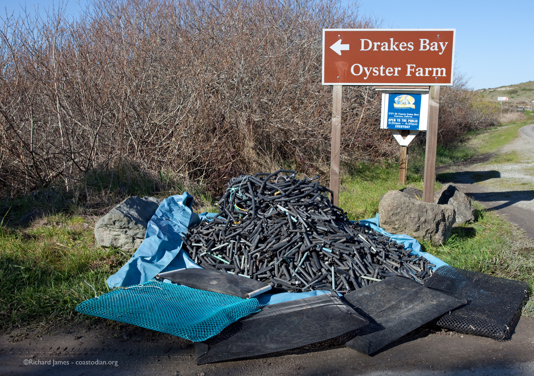 Sustainable oyster farming, West Marin style. Click image to see larger version.