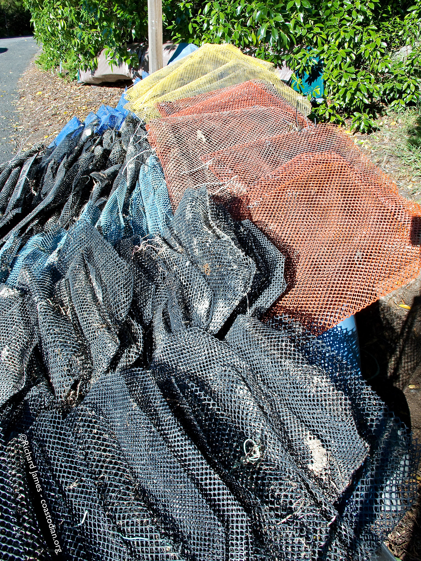 160 polyethelene oyster grow out bags left to the elements in Tomales Bay