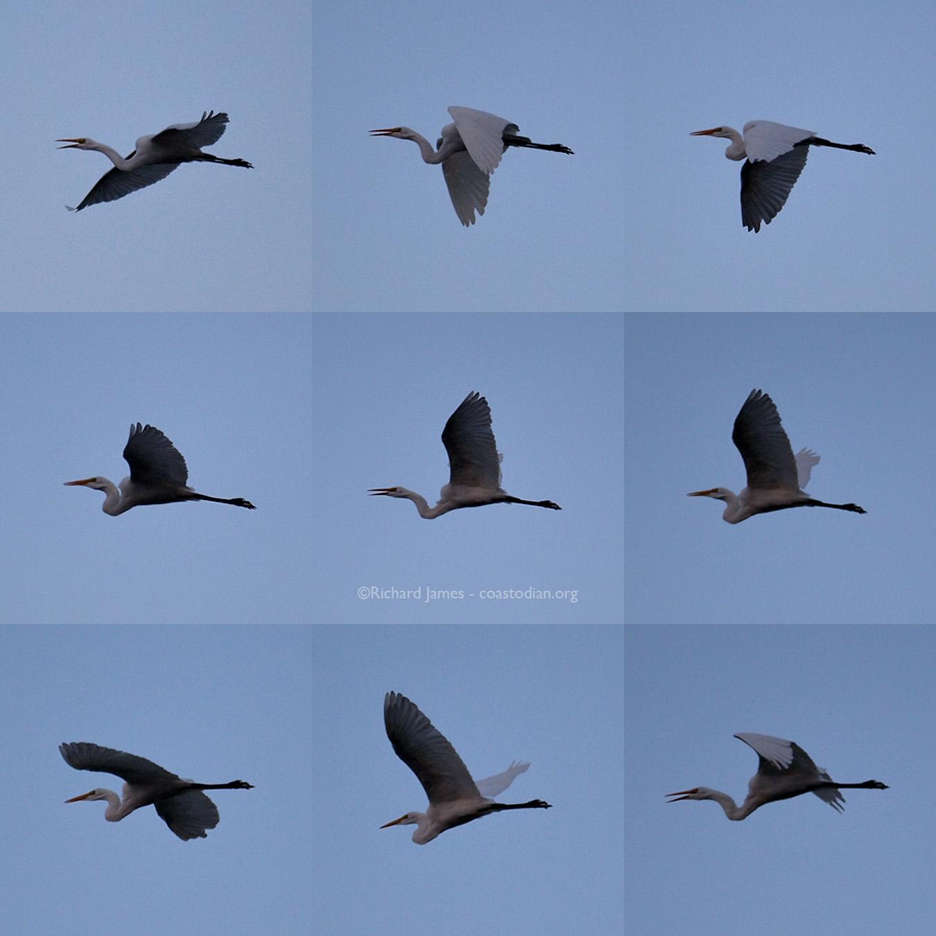 9-Egrets.cw