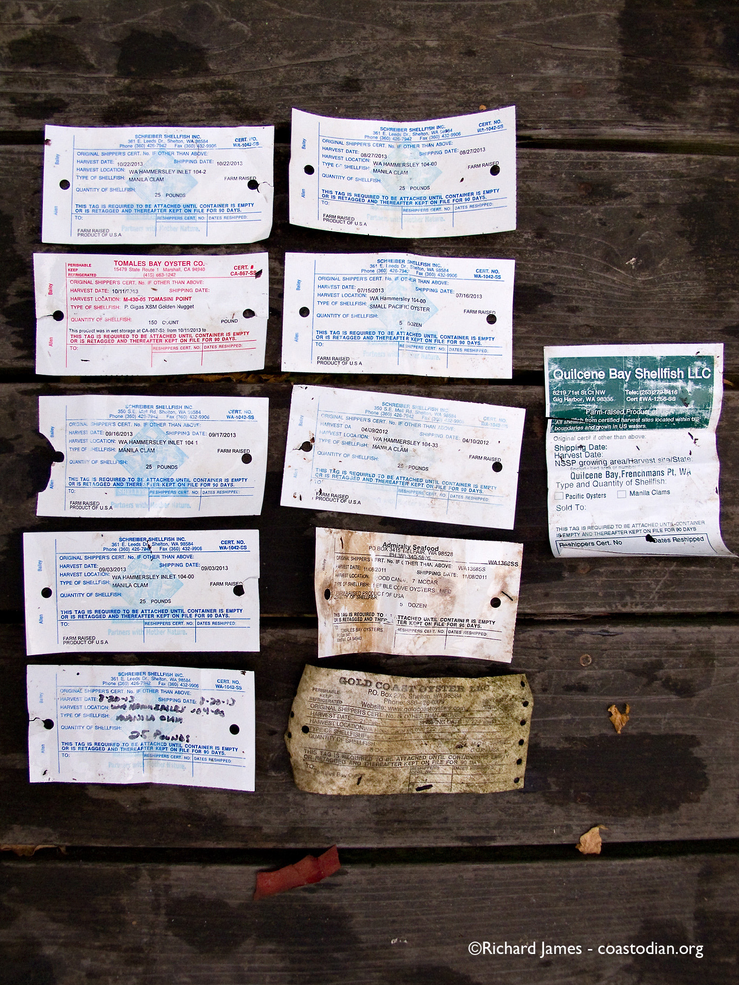 Tags from bags of shellfish, shipped from Washington State to Marin.  All found on 17 November, 2013 along the shore near Tomales Bay Oyster Company. Check out the dates on those tags... Click image for a larger version. Know your farmer, call them up!