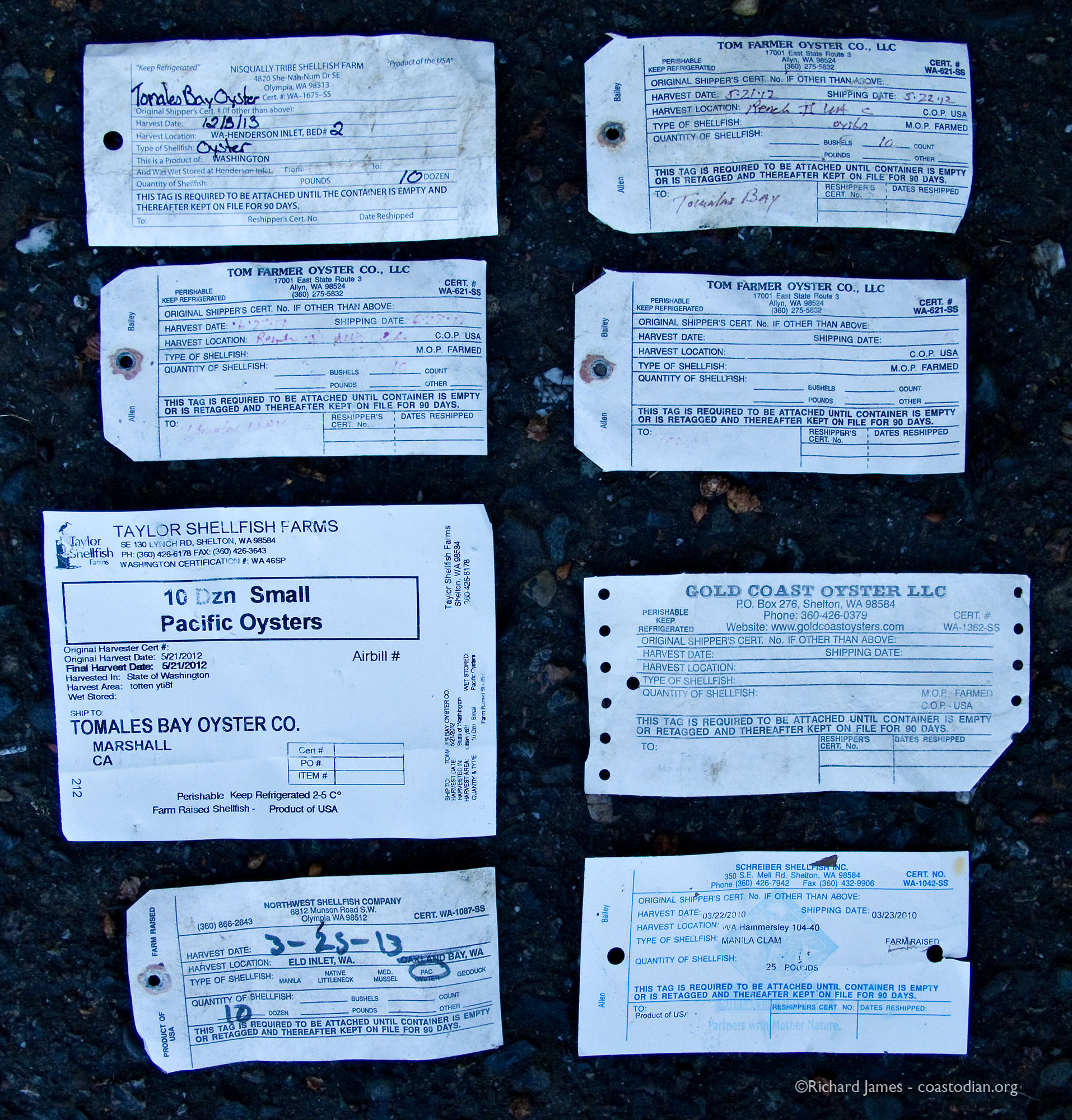 More tags from those Washington oysters - Nisqually Tribe Shellfish Farm, Tom Farmer Oyster Company, Taylor Shellfish Farms, Gold Coast Oyster LLC, Northwest Shellfish Company, Schreiber Shellfish Inc.
