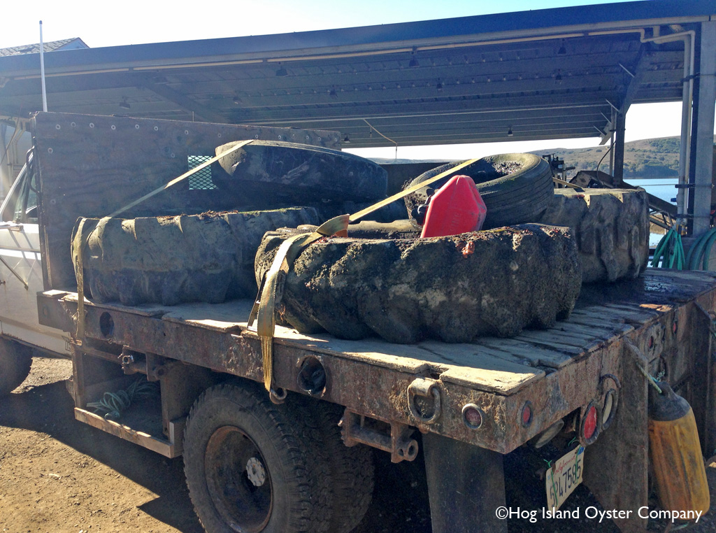Two workers from Hog Island Oyster Company drove to Millerton Point on 20 January, 2014 and recovered six discarded tires from Tomales Bay. - - Bravo!