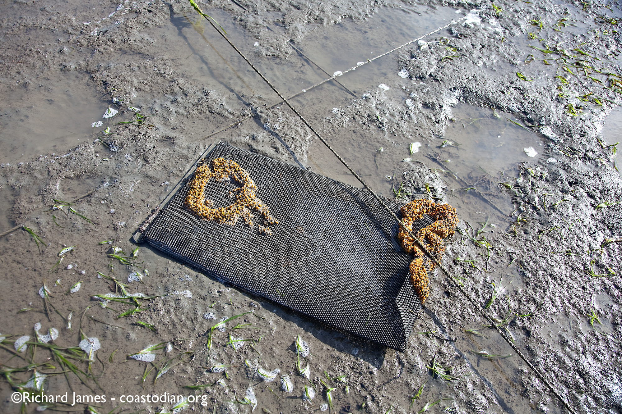 abandoned oyster bags - Tomales Bay Oyster Company