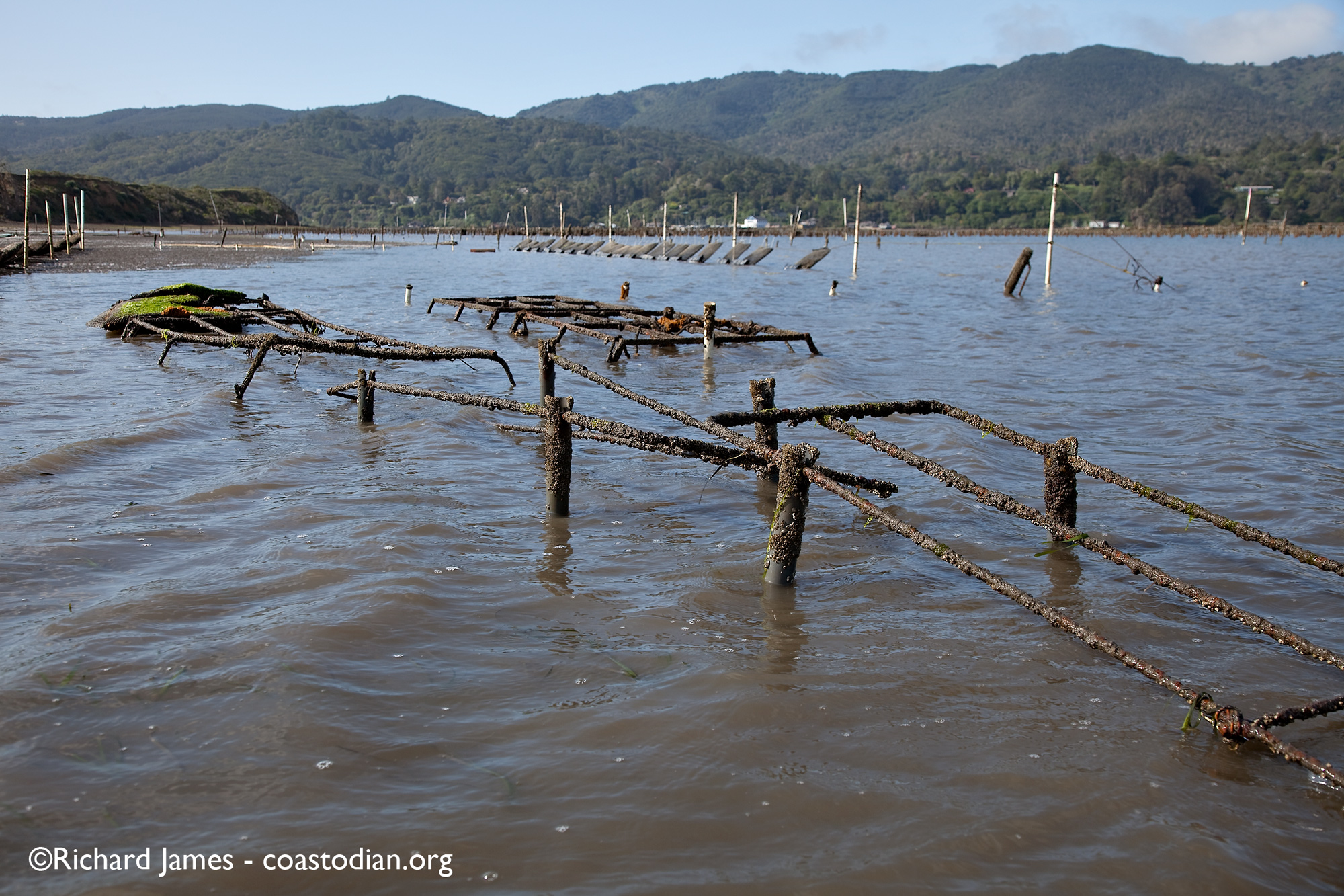 abandoned oyster racks - Tomales Bay Oyster Company