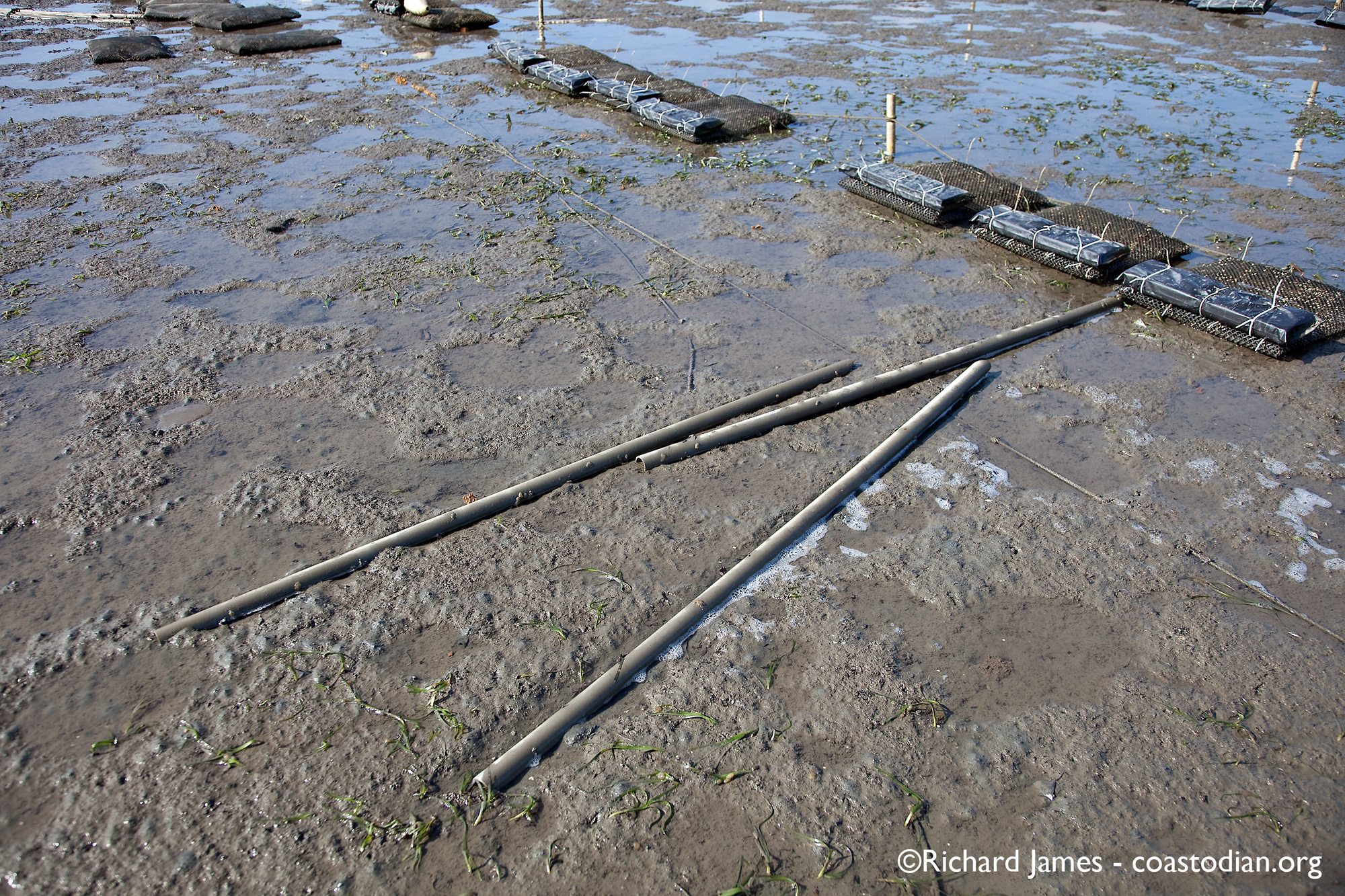 abandoned PVC pipes  - Tomales Bay Oyster Company