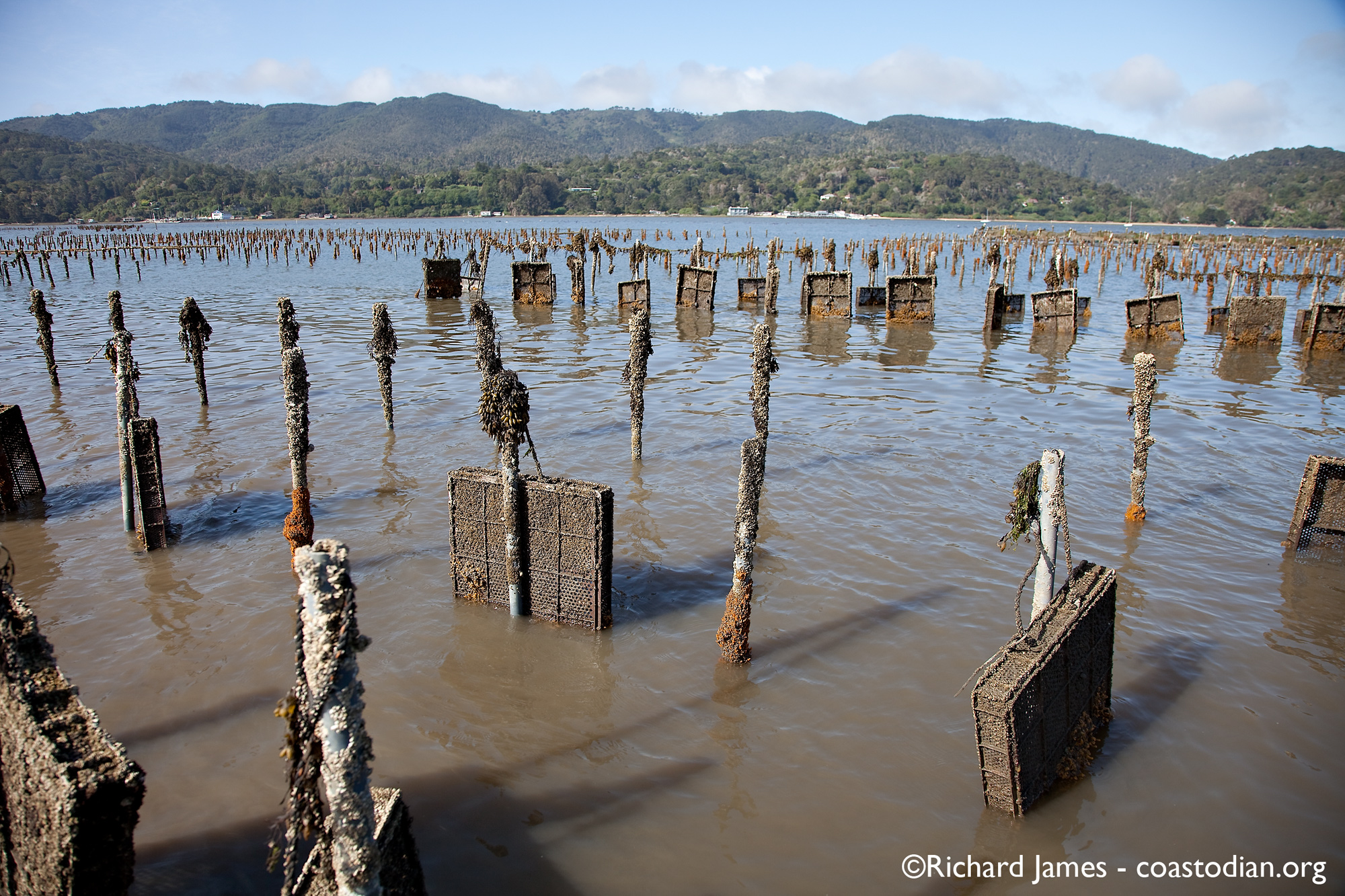 abandoned plastic trays - Tomales Bay Oyster Company