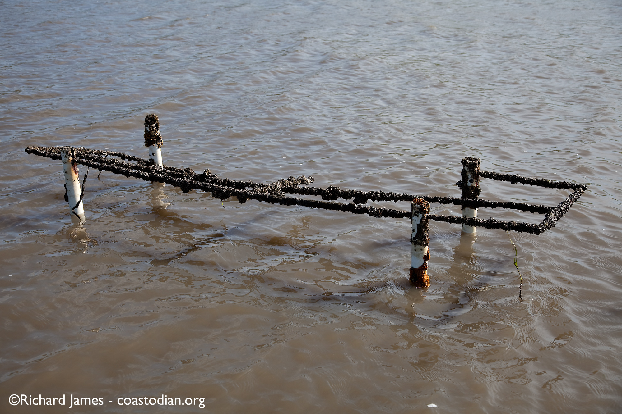 abandoned oyster rack - Tomales Bay Oyster Company