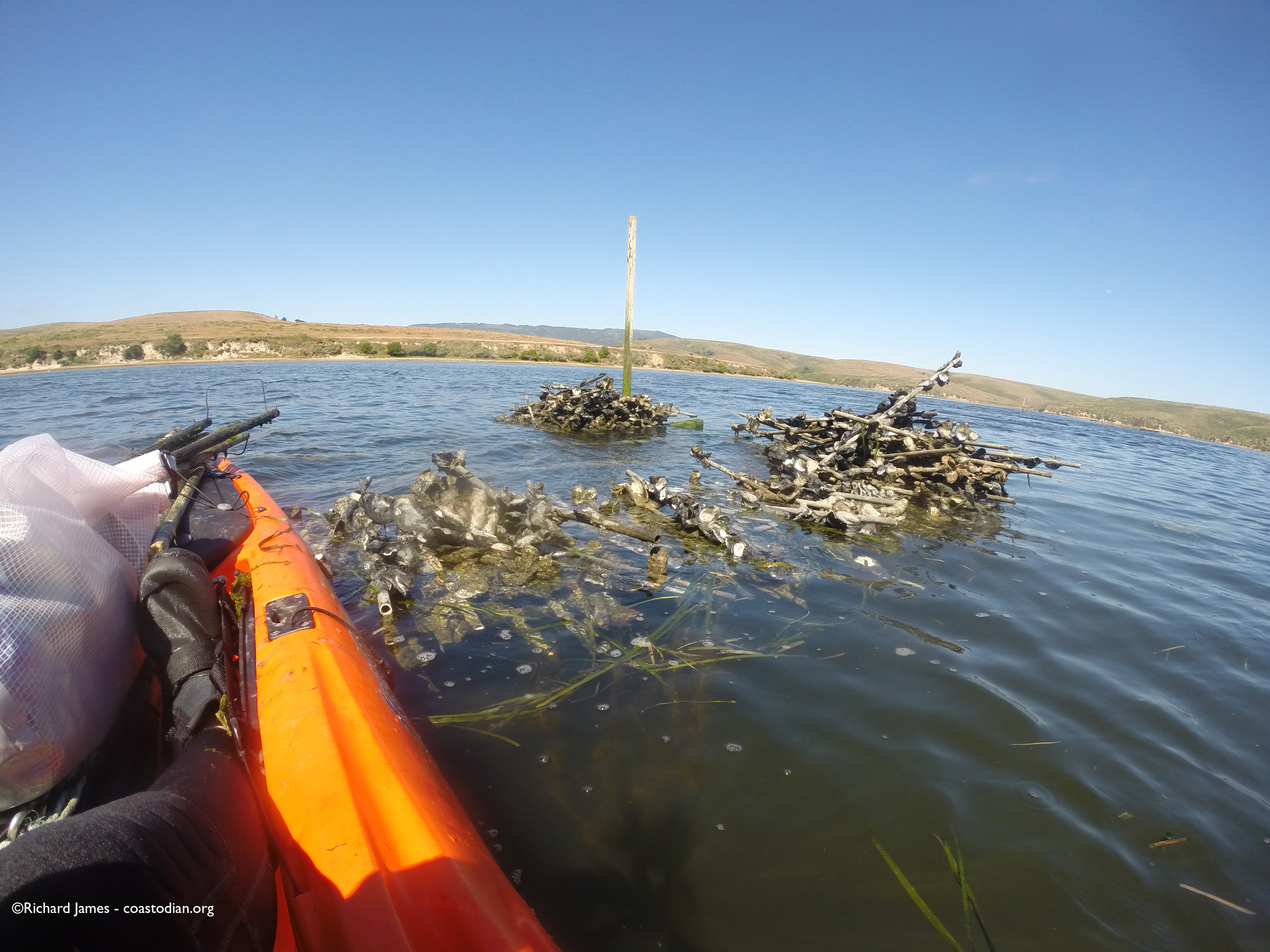 """60-70 """"french tubes"""" left on floor of Drakes Estero by Drakes Bay Oyster Company"""