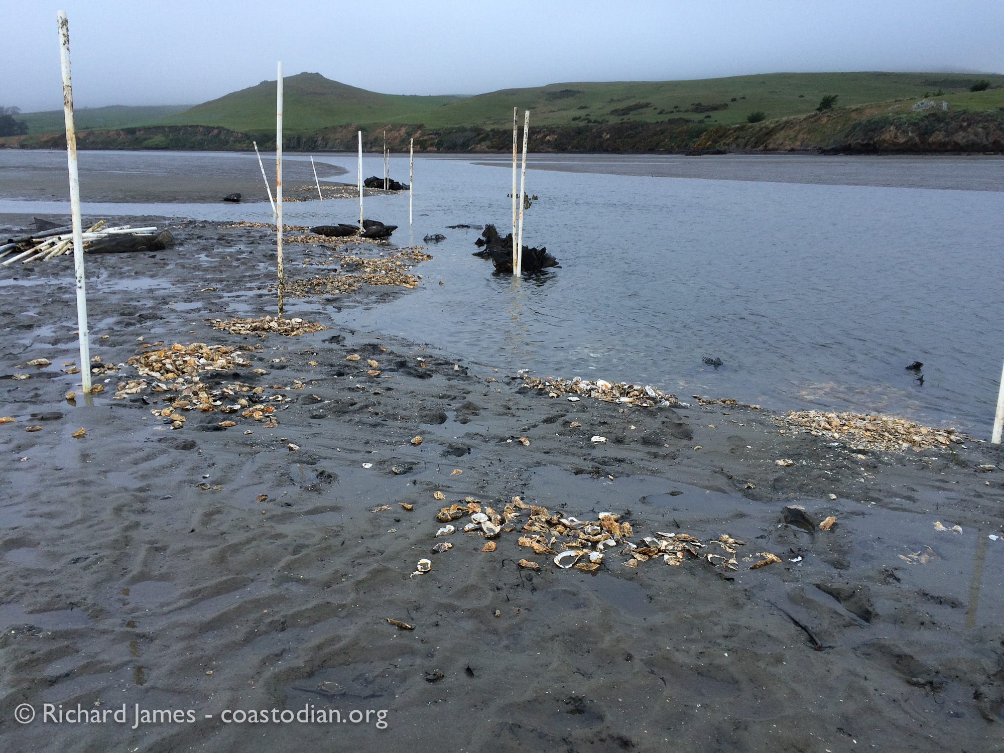 Area of unpermitted structure in Tomales Bay at Walker Creek