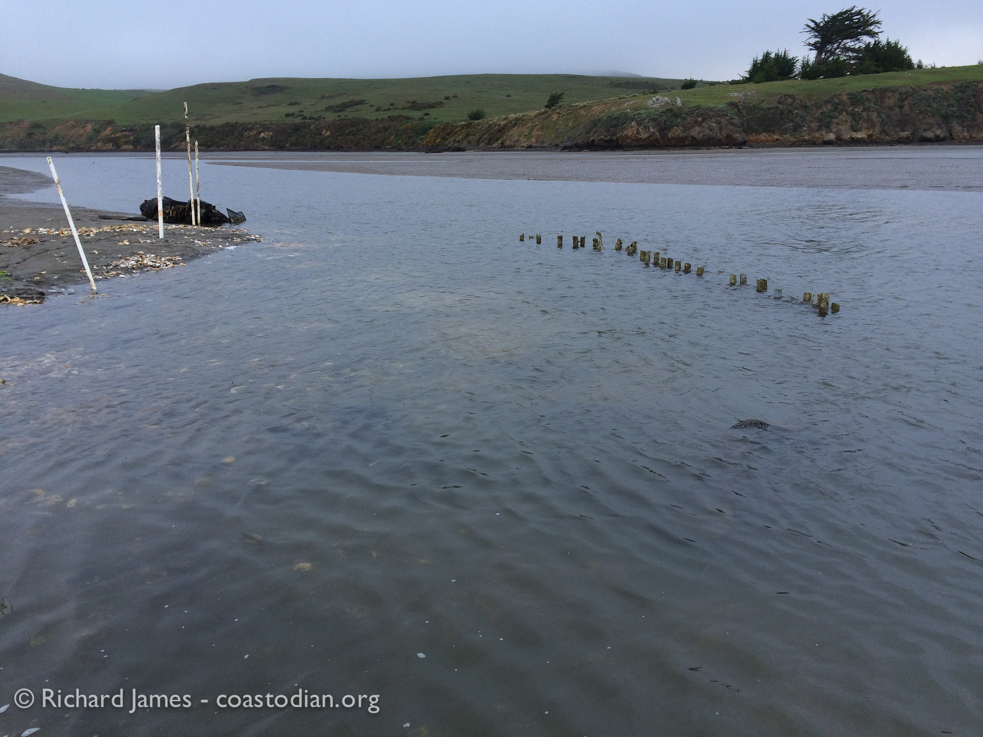 mostly submerged PVC tubes and shell-filled growout bags at area of unpermitted structure in Tomales Bay at Walker Creek