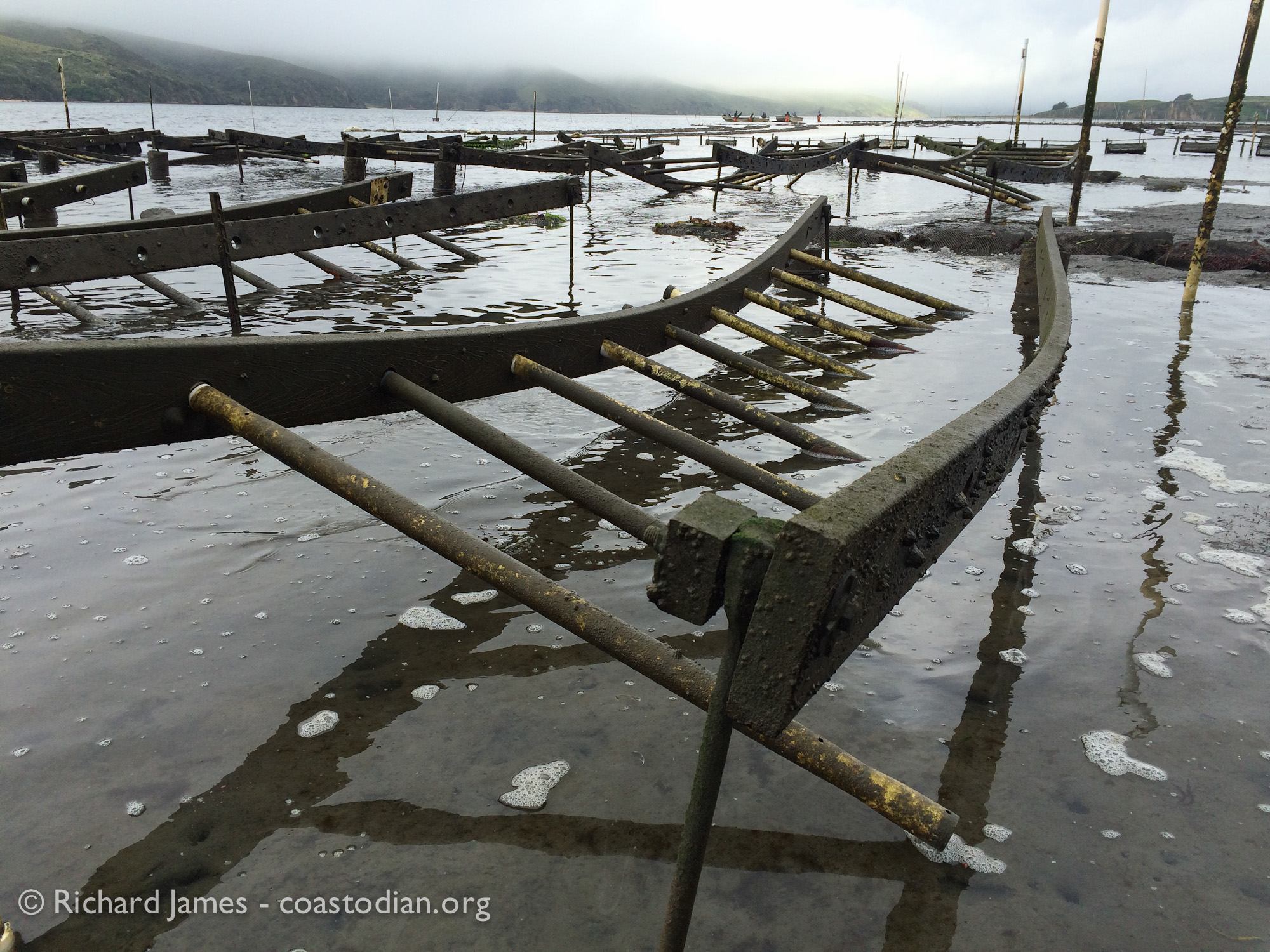 ©Richard James - coastodian.org Stanway oyster racks on Hog Island Oysters lease M-430-10 on 22 March, 2015