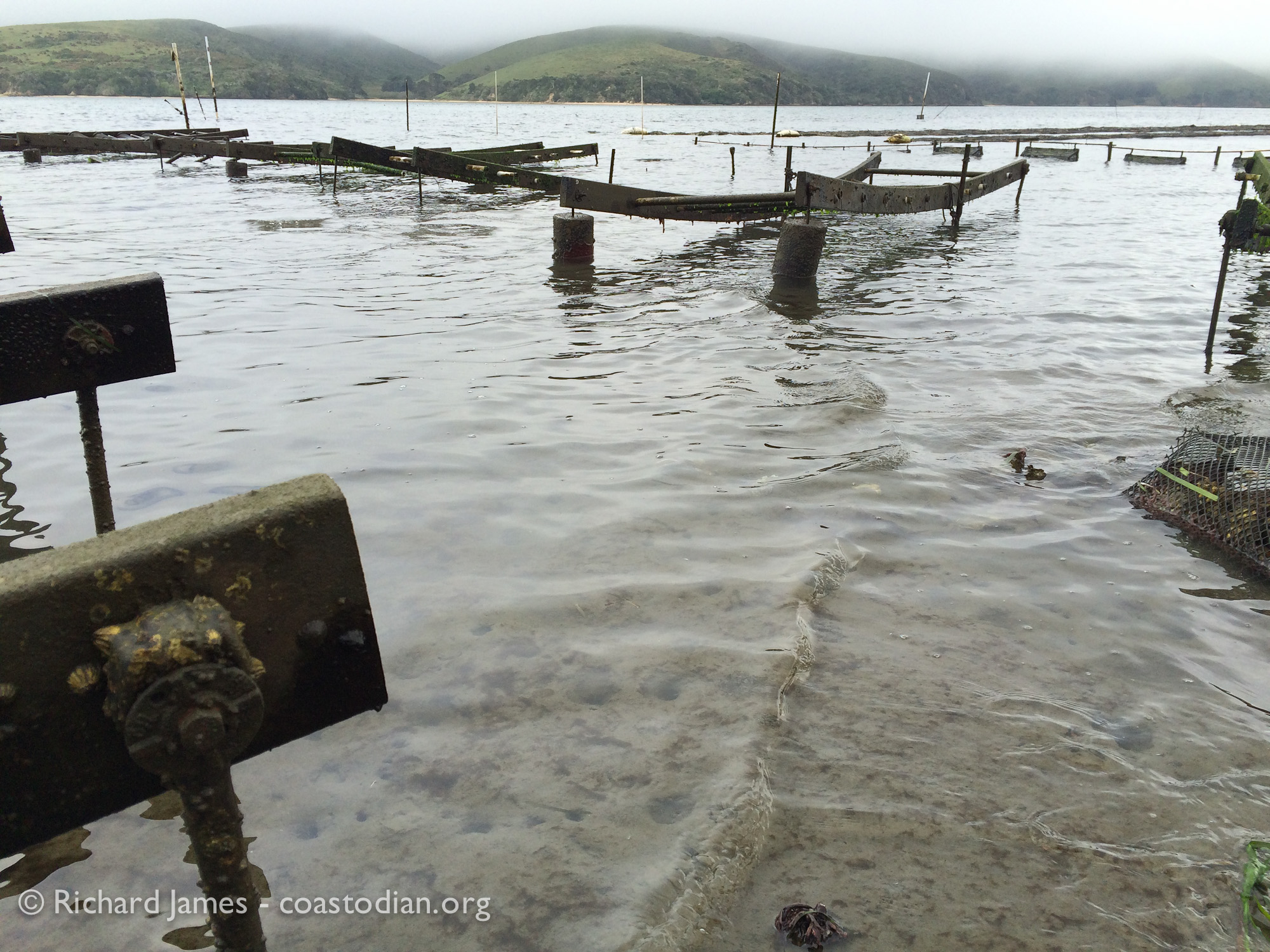 ©Richard James - coastodian.org Stanway oyster racks on Hog Island Oysters lease M-430-10 on 22 March, 2015
