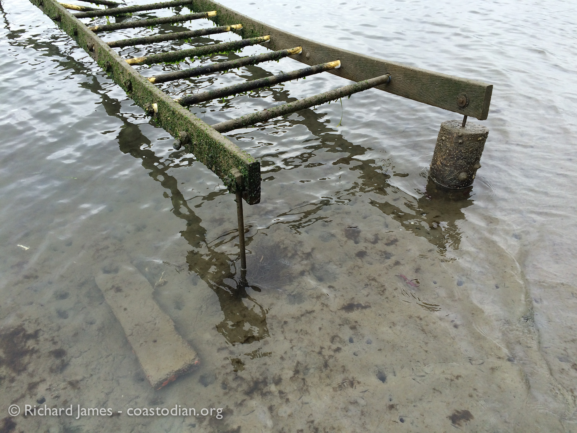 ©Richard James - coastodian.org Stanway oyster racks and abandoned rack lumber on Hog Island Oysters lease M-430-10 on 22 March, 2015