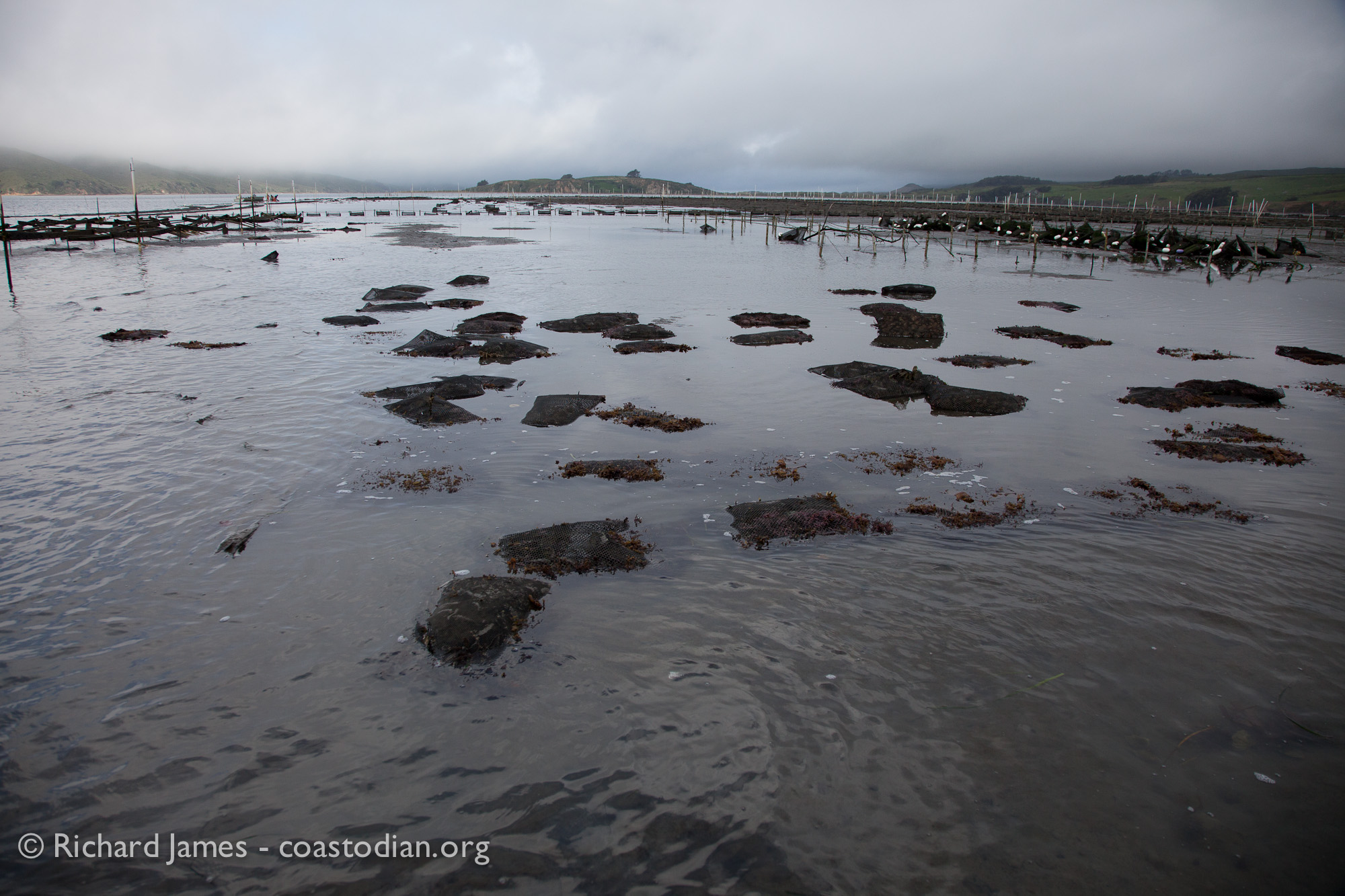 ©Richard James - coastodian.org Hog Island Oysters grow-out bags on lease M-430-10 on 22 March, 2015