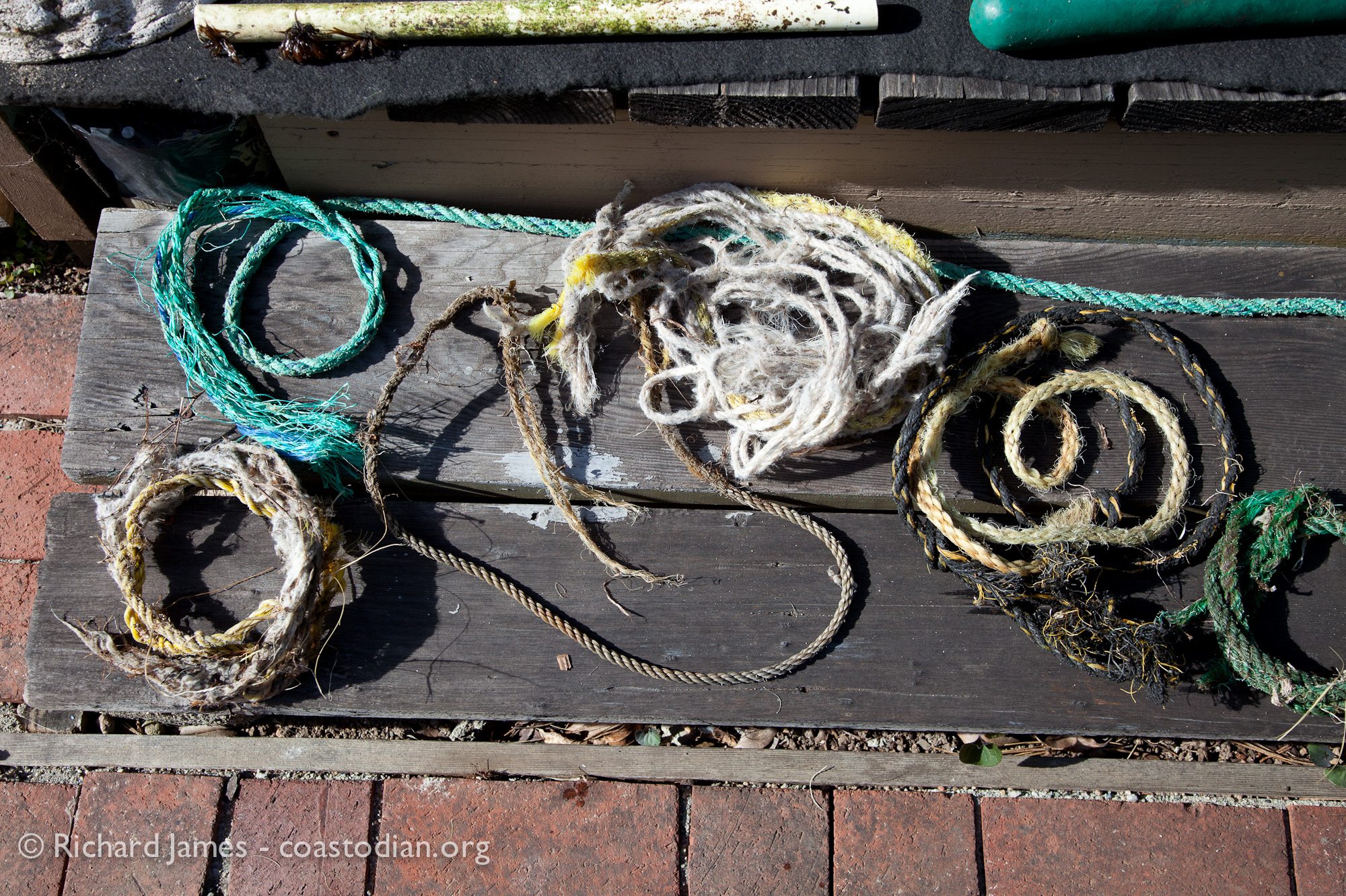 ©Richard James - coastodian.org Abandoned rope remnants collected on shore adjacent to Hog Island Oysters lease M-430-15 on 22 March, 2015