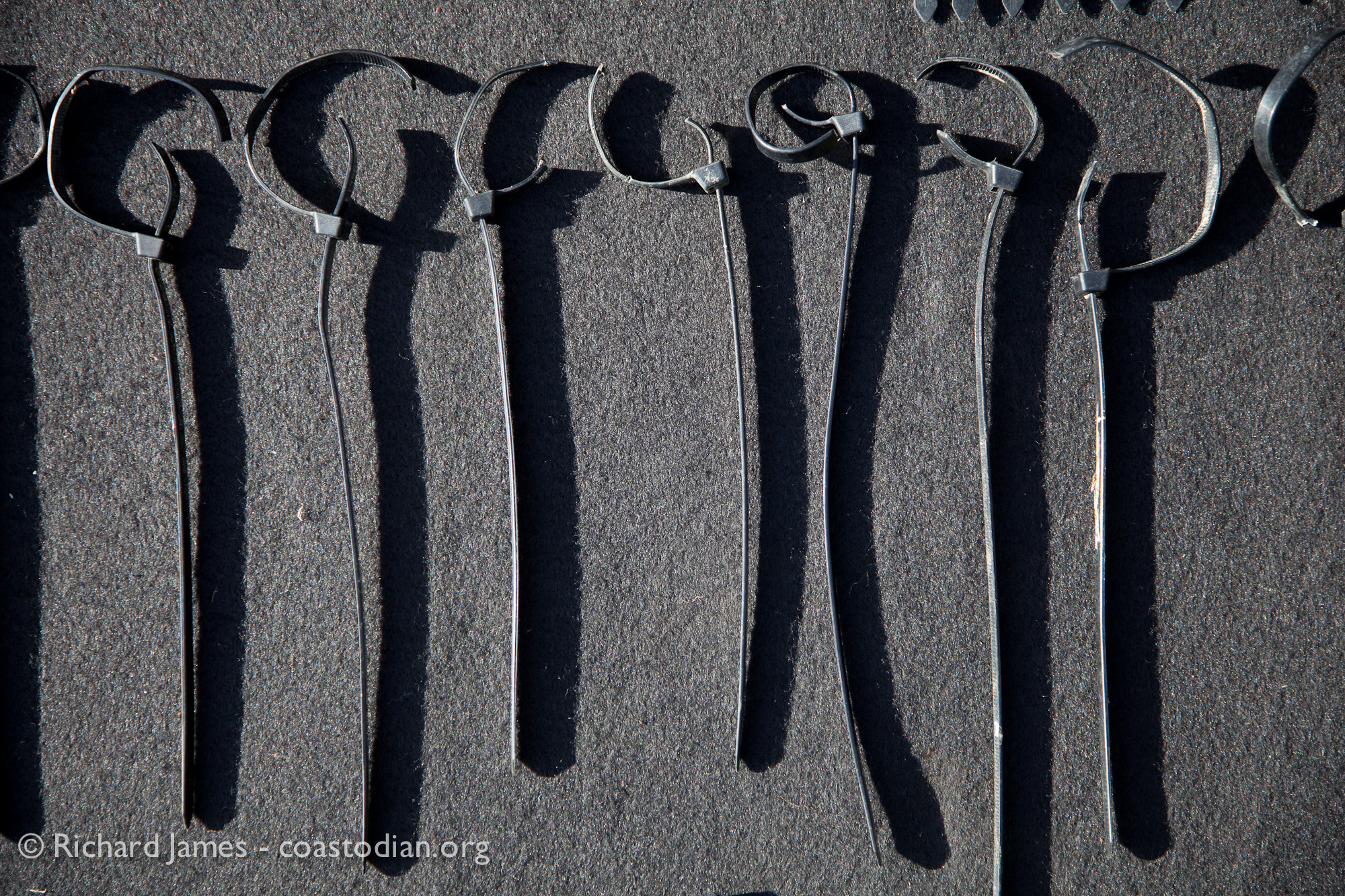 ©Richard James - coastodian.org Abandoned zip-ties collected on shore adjacent to Hog Island Oysters lease M-430-15 on 22 March, 2015