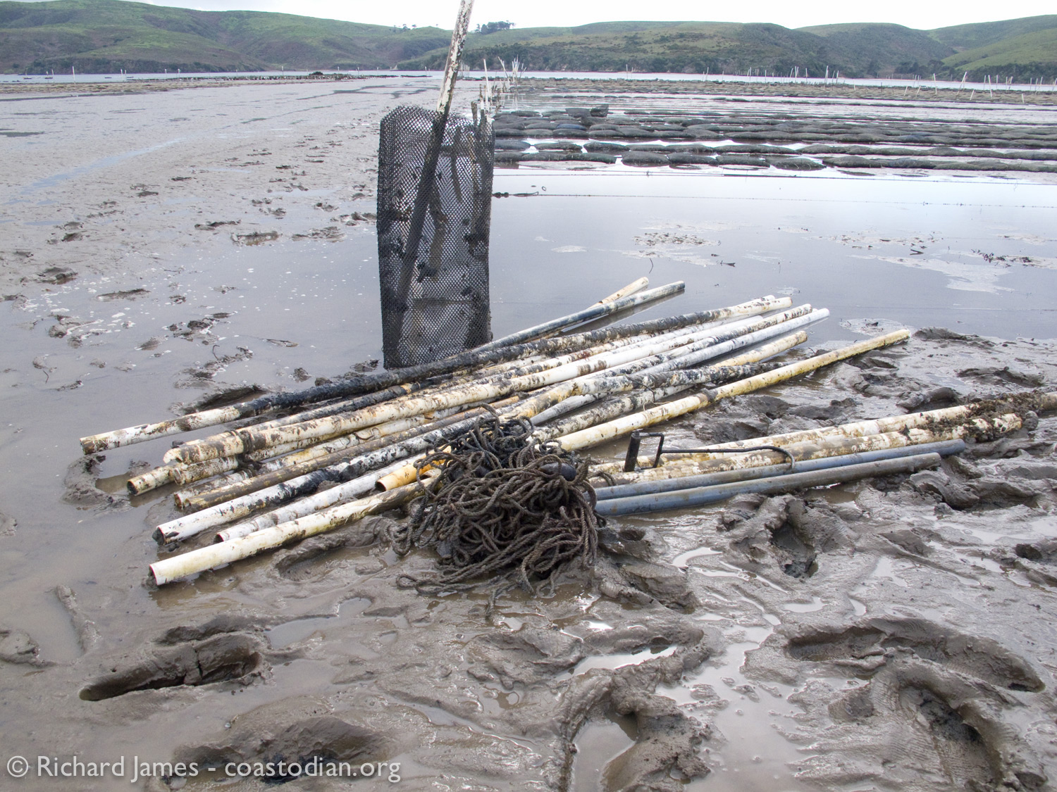 PVC pipe, grow-out bag and rope collected on or near the Tomales Bay Oyster Company lease