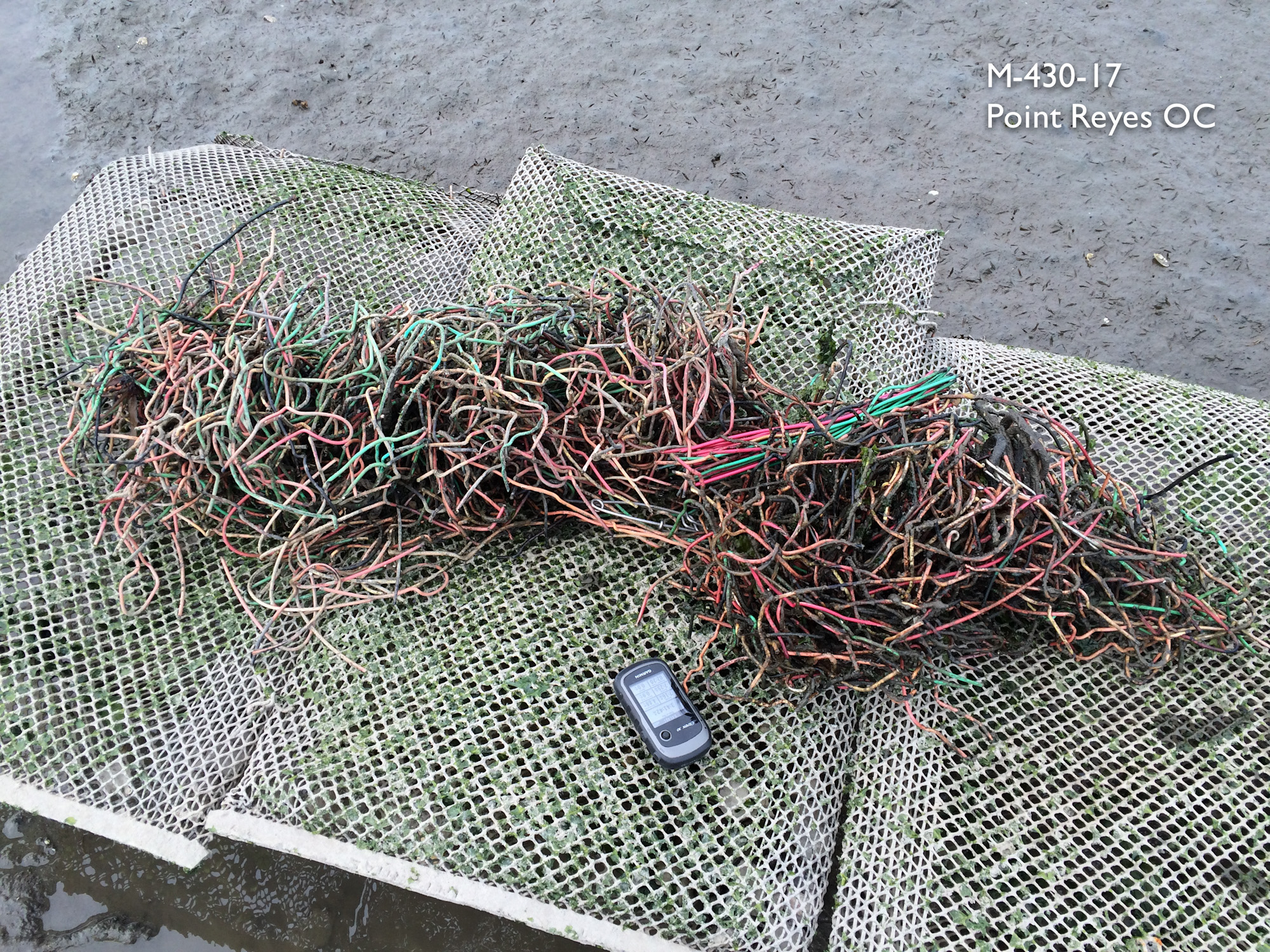 About 20 pounds of plastic coated copper wire i picked up from under the racks, laying in the mud on lease M-430-17, run by Point Reyes Oyster Company.