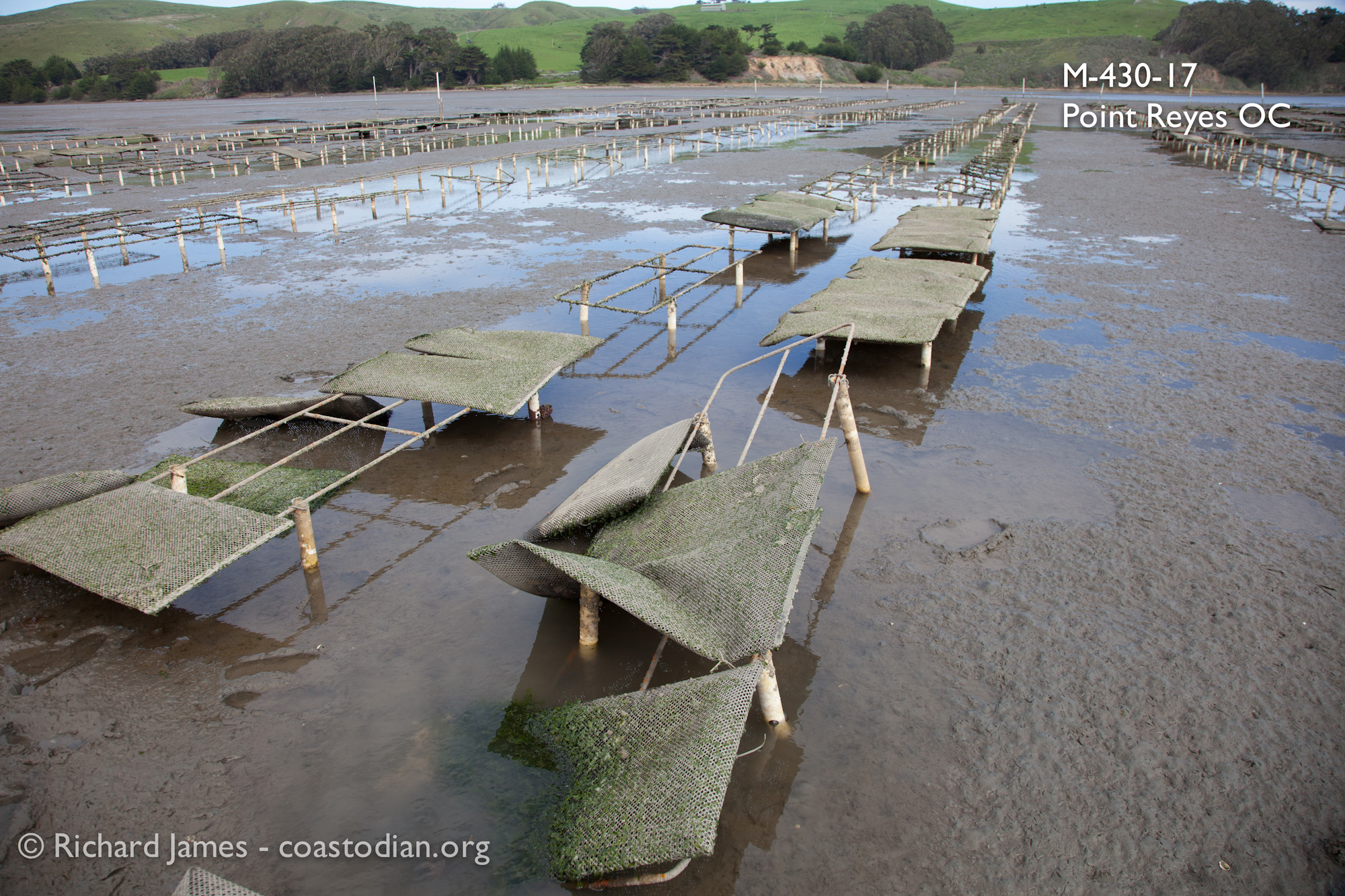 Racks in a state of disrepair on lease M-430-17, run by Point Reyes Oyster Company.