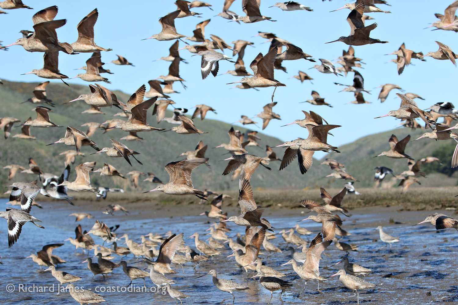 """The true """"owners"""" of Tomales Bay."""