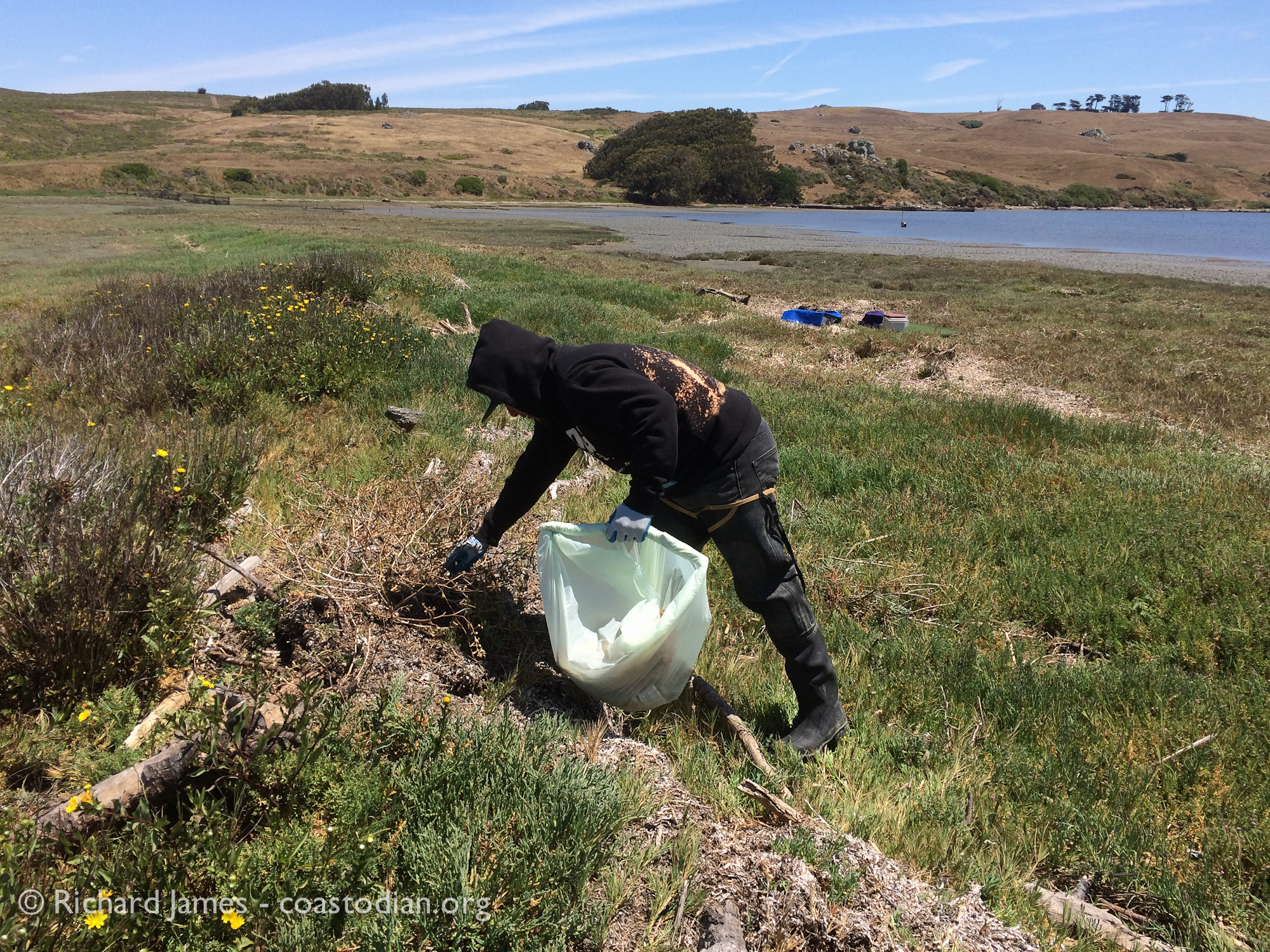 Hog Island Oyster worker on trash patrol, Tom's Point - Tomales Bay