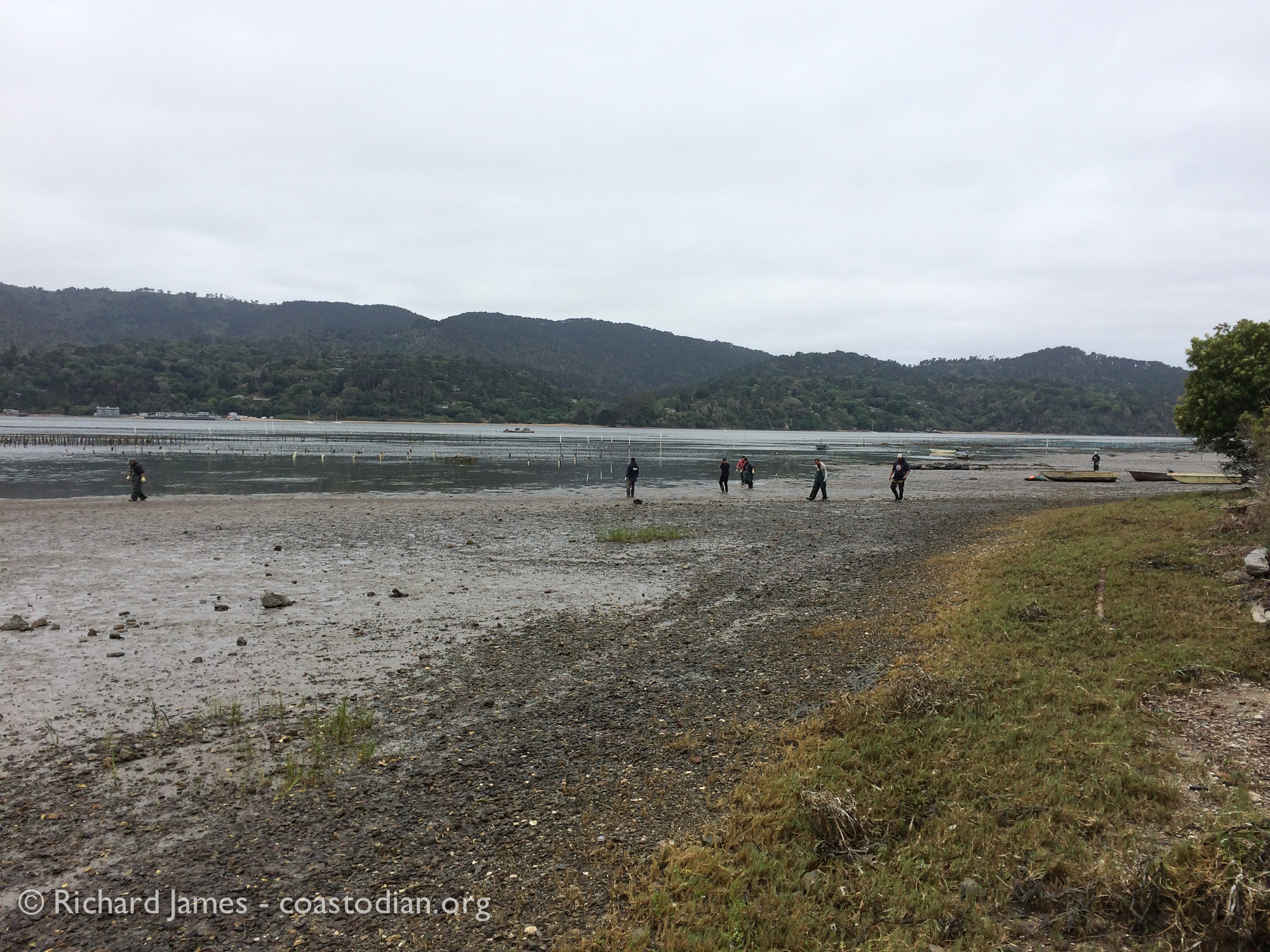 Tomales Bay Oyster Company owner and staff picking up their trash. What a great idea!
