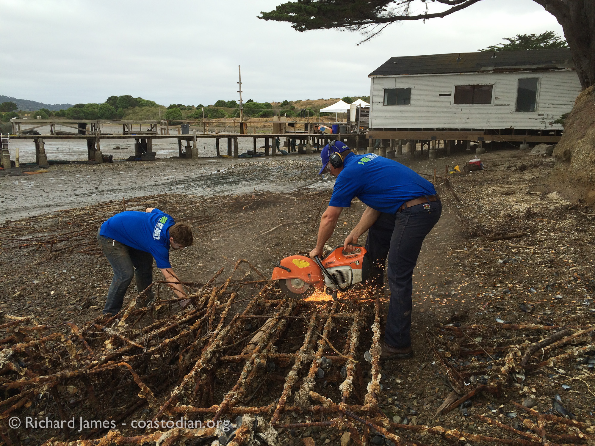 1-800-got-junk guys removing oyster farming junk from Tomales Bay.