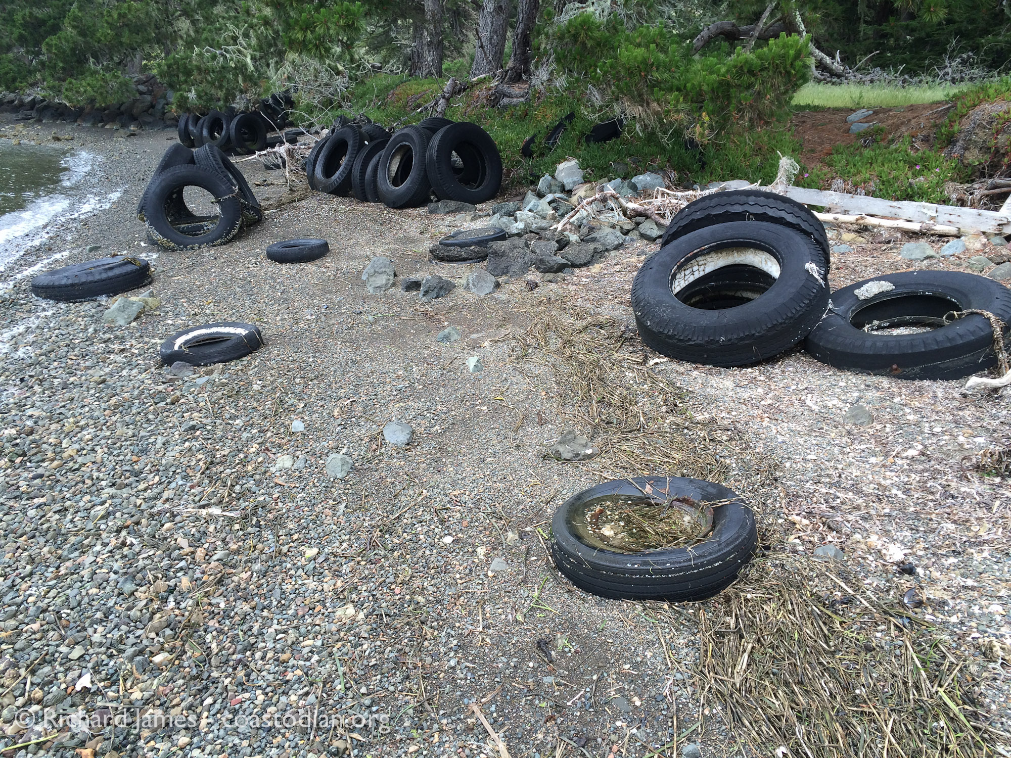 tires littering Tomales Bay at Marconi Cove.
