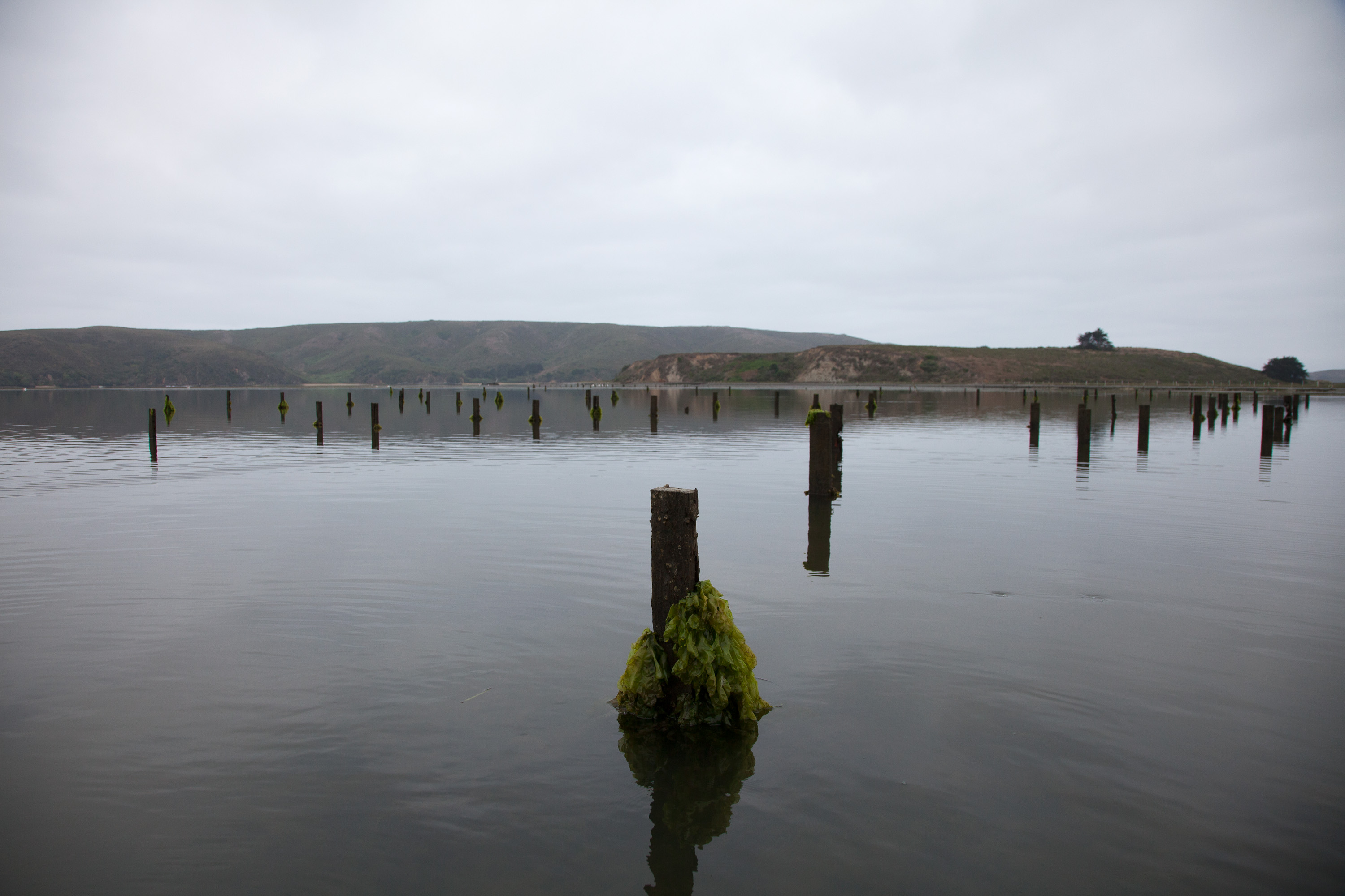 150 chemically treated posts from many decades ago near Tom's Point awaiting removal