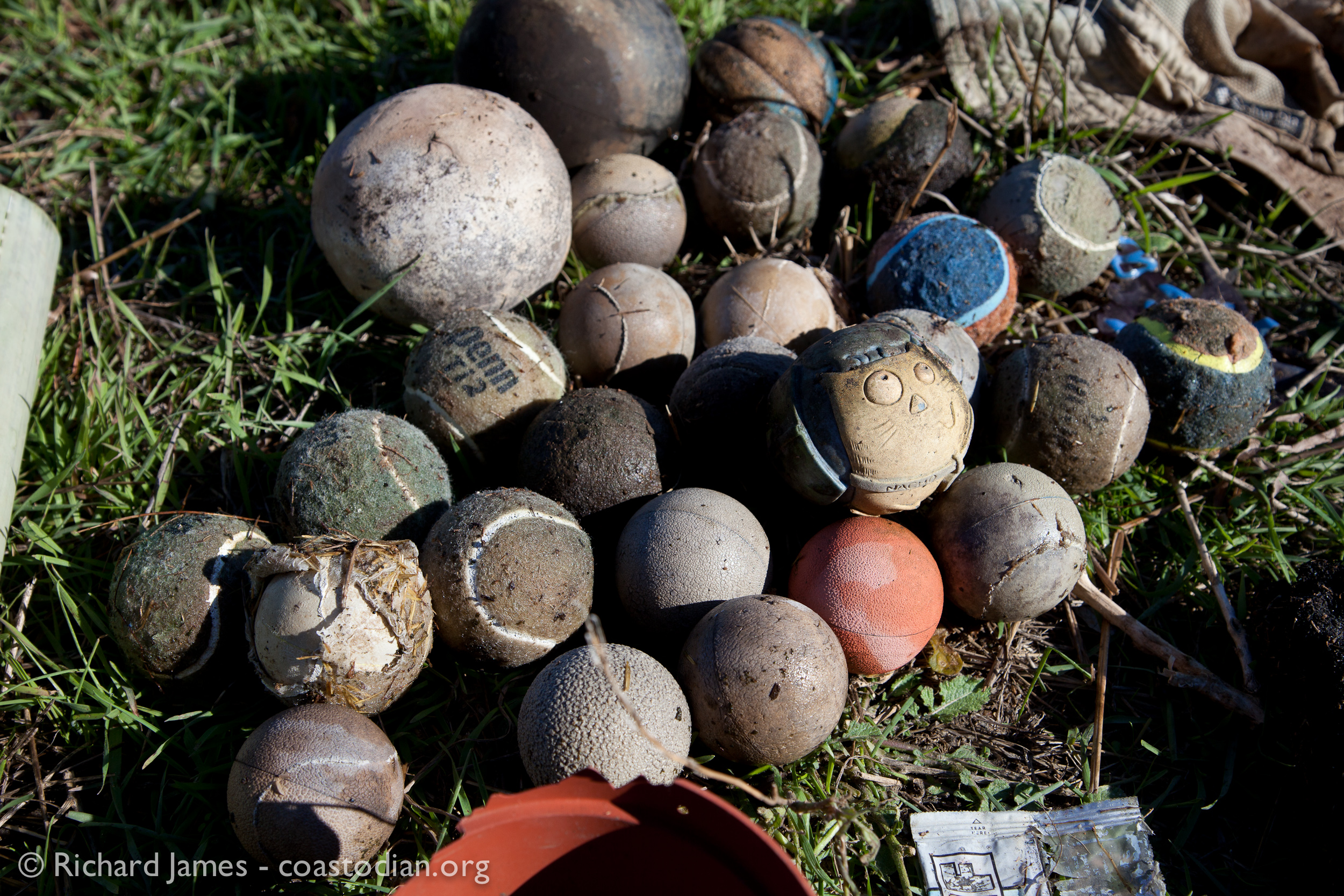 Lots of unhappy (or lazy) dogs that failed to retrieve these balls. ©Richard James - coastodian.org