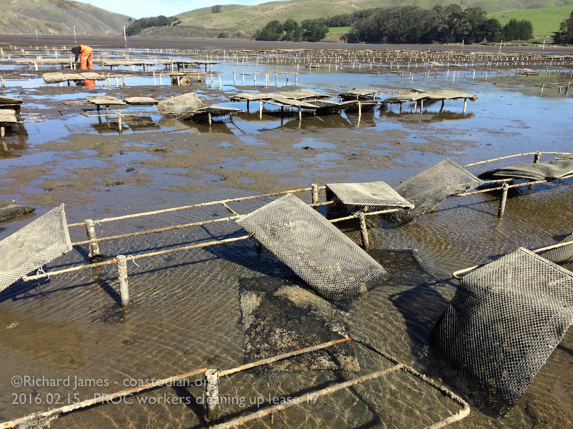 PROC workers undoing years of neglect in Tomales Bay at Walker Creek. ©Richard James - coastodian.org