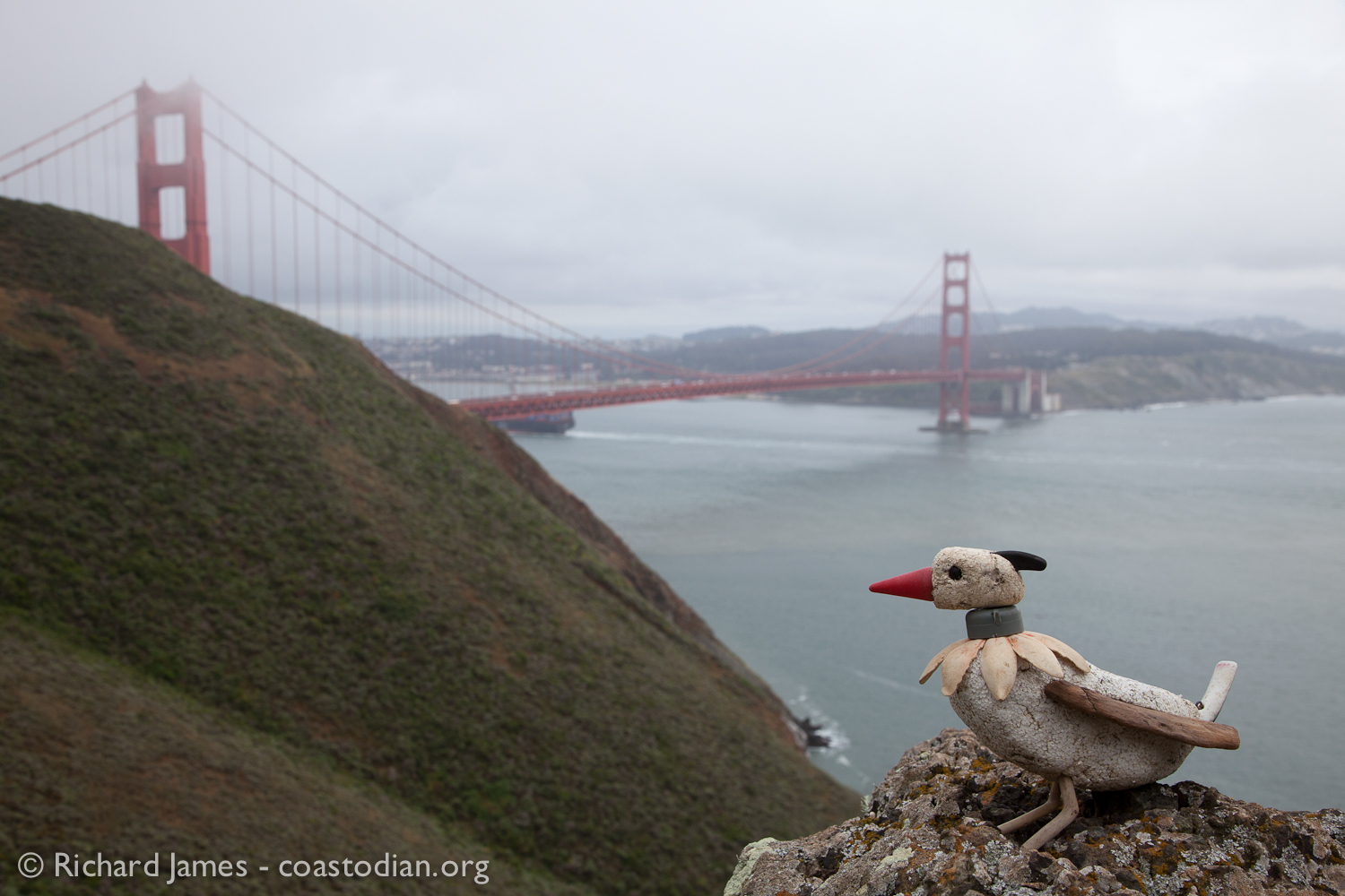 What is this? A rare sighting of the Heisenberg's Hammerkopf near The Golden Gate Bridge! Will we see more of this rare vagrant? ©Richard James - coastodian.org
