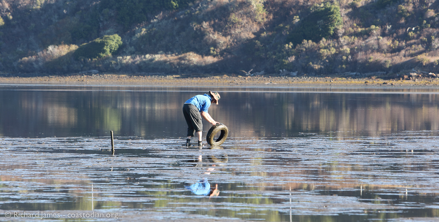 Chris plucks one of five tires collected from the cherished waters of Tomales Bay